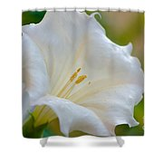 Datura Hybrid White Flower Shower Curtain