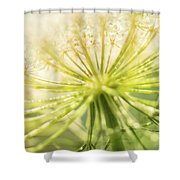 Daucus Carota - Queen Anne's Lace - Wildflower Shower Curtain
