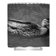 #dave Shower Curtain