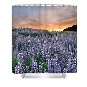 Dawn Of Lupine Shower Curtain