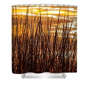 Dawn's Early Light Shower Curtain by Karen Wiles