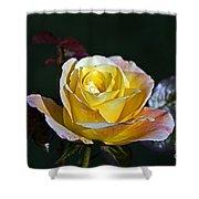 Day Breaker Rose Shower Curtain
