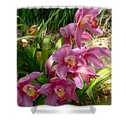Day Brighteners Shower Curtain