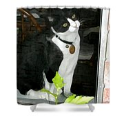 Day For Dreaming Shower Curtain