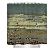 Day For The Birds Shower Curtain