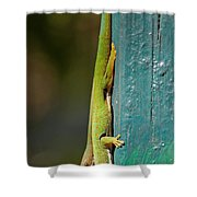 day geckos from Madagascar 1 Shower Curtain