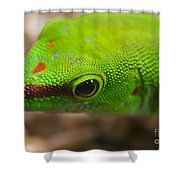 Day Geicko Shower Curtain