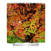 Day Glo Autumn Shower Curtain