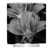 Day Lilies In Black And White Shower Curtain