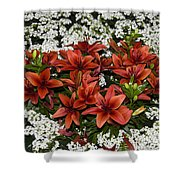 Day Lillies Shower Curtain