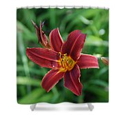 Day Lily 3648 Shower Curtain
