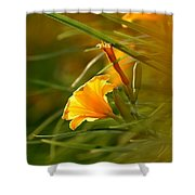 Day Lily Backlit Shower Curtain