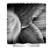 Day Lily Detail - Black And White Shower Curtain