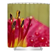 Day Lily Dew Shower Curtain