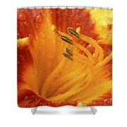 Day Lily In The Rain - 688 Shower Curtain