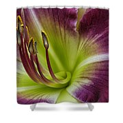 Day Lily Intimate Shower Curtain