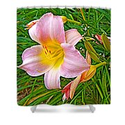 Day Lily Near Ottawa-ontario  Shower Curtain