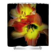 Day Lily On Black Shower Curtain