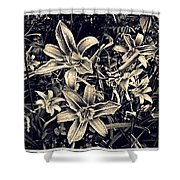 Day Lily Triptych Shower Curtain by Sarah Loft