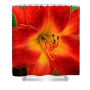 Day Lily1 Shower Curtain