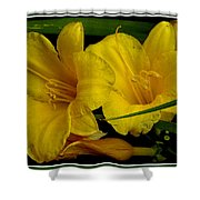 Day Of The Lilies  Shower Curtain