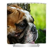 Daydreamer Shower Curtain
