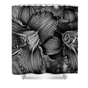 Daylilies Black And White Shower Curtain