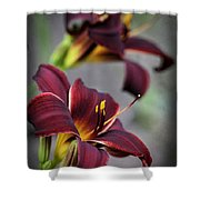 Daylilies Forever Shower Curtain
