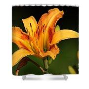 Daylillies0131 Shower Curtain