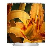 Daylillies0185 Shower Curtain