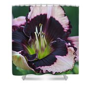 Daylily 12 Shower Curtain