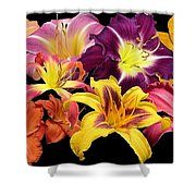 Daylily Banner Shower Curtain