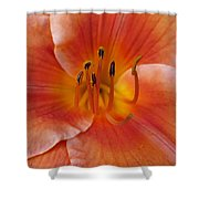 Daylily Bloom Shower Curtain