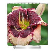 Daylily Collection # 7 Shower Curtain
