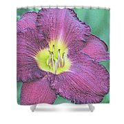 Daylily Collection #26 Shower Curtain