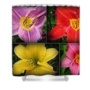 Daylily Days  Shower Curtain