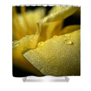 Daylily Dew Drops Shower Curtain