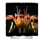 Daylily Doubled Shower Curtain