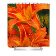Daylily Duo  Shower Curtain