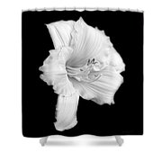 Daylily Flower Portrait Black And White Shower Curtain