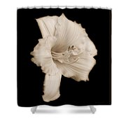 Daylily Flower Portrait Sepia Shower Curtain