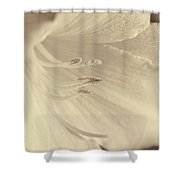 Daylily Flower Soft Brown Shower Curtain