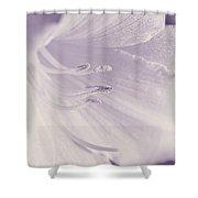 White Daylily Flower Soft Lavender Shower Curtain