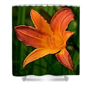 Daylily II Shower Curtain