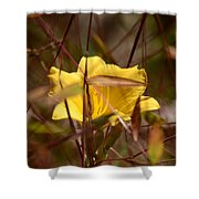 Daylily In Autumn Shower Curtain