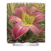 Daylily In Gold Leaf Shower Curtain