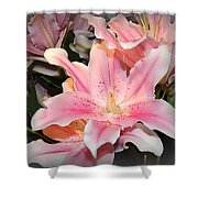 Pink Daylily In Bloom Shower Curtain