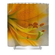 Gold Daylily Close-up Shower Curtain