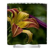 Daylily Picture 452 Shower Curtain