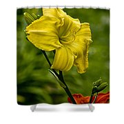 Daylily Picture 469 Shower Curtain